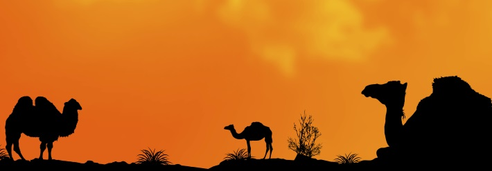 Camels, horses and the secrets of creating impactful content